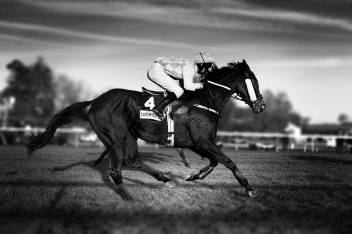 Racehorse3